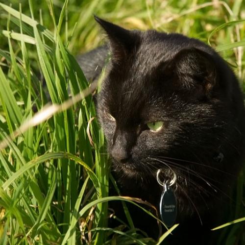 Kevin, Le Friendly Cat Du Mont Eden !