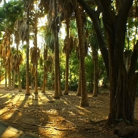 Darwin Botanic Garden Palmtrees