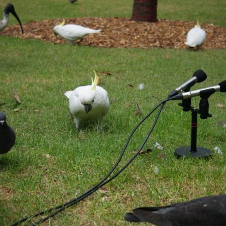 Jérémie Interviewe Les Oiseaux Du Jardin Botanique De Sydney