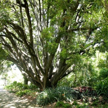 Sydney Royal Botanic Gardens