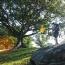 4 Raisons D'aller Dans Les Jardins Botaniques En Australie