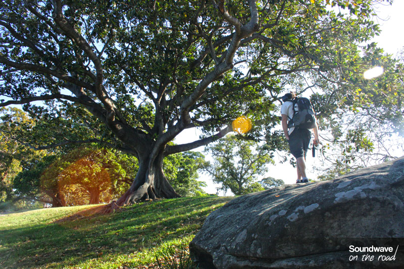 Sydney botanic garden sunlight