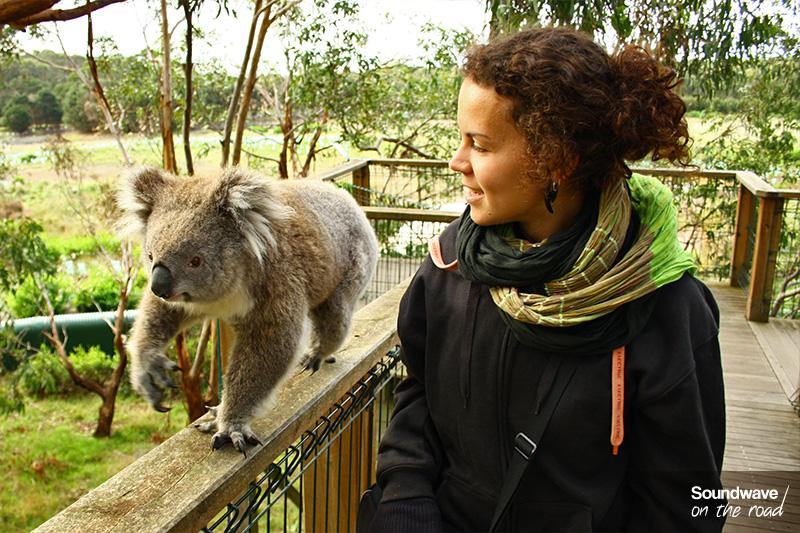 Un koala et une jeune femme