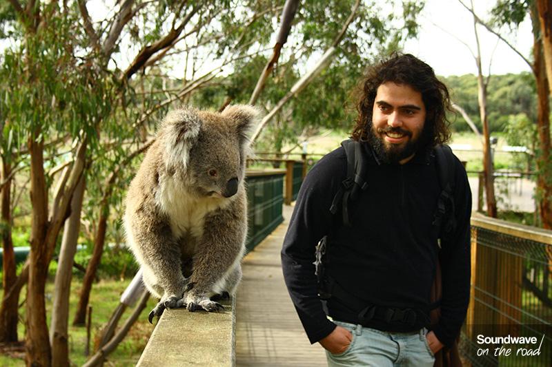 Un koala et un jeune homme