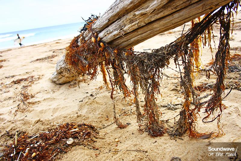 Plage de Woolamai - Phillip Island - Australie