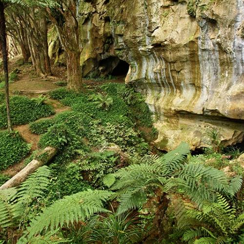 Jungle Verdoyante En Nouvelle Zélande
