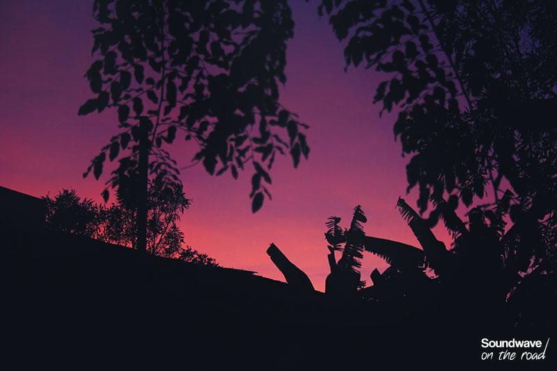 Feuilles de bananier sur ciel rose et violet
