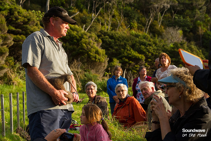 Kiwi conservation and release