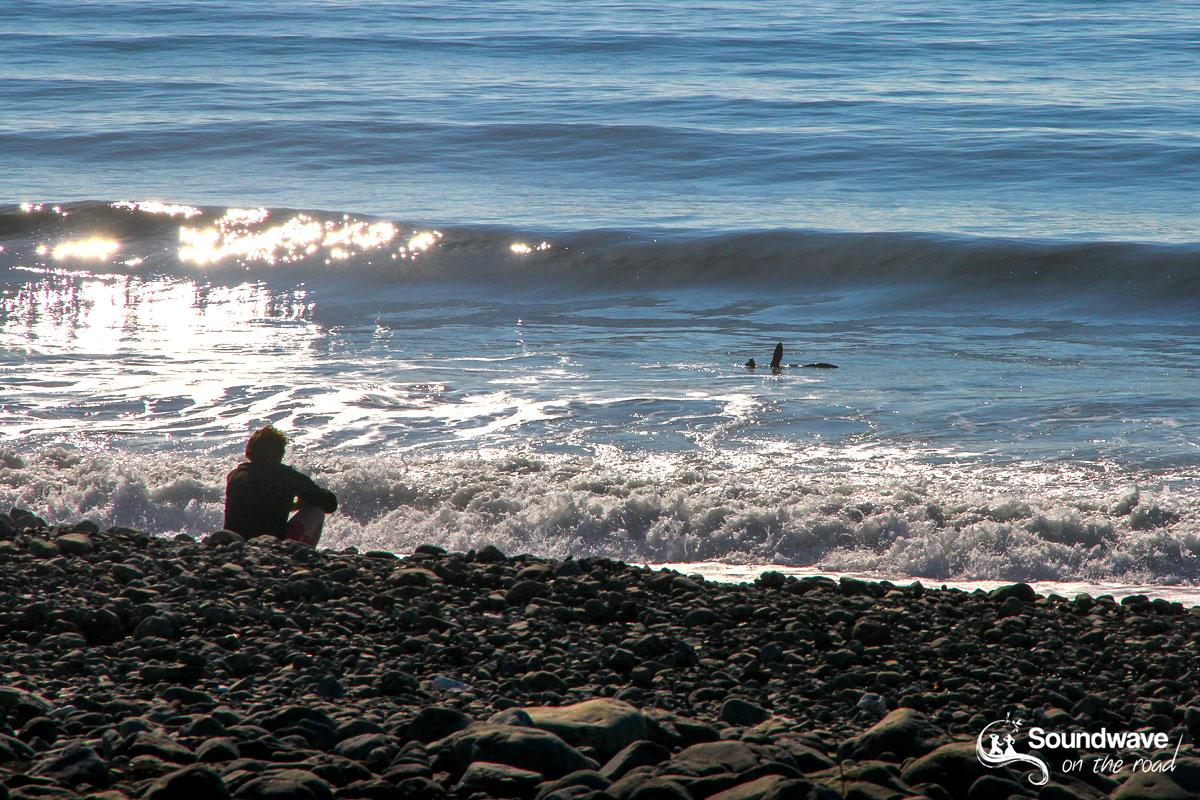 A seal in the waves near Kaikoura