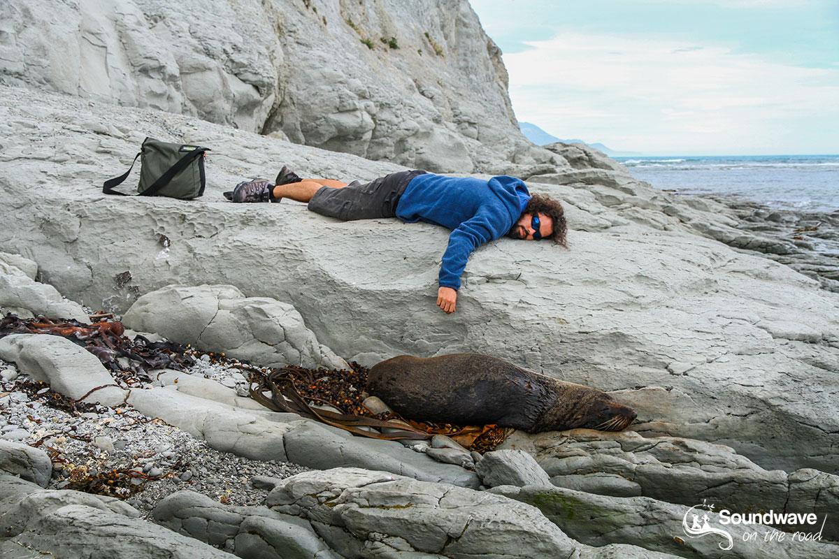 New Zealand fur seal in Kaikoura