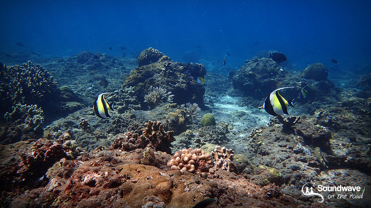 Snorkeling in Coral Garden, Amed, Bali