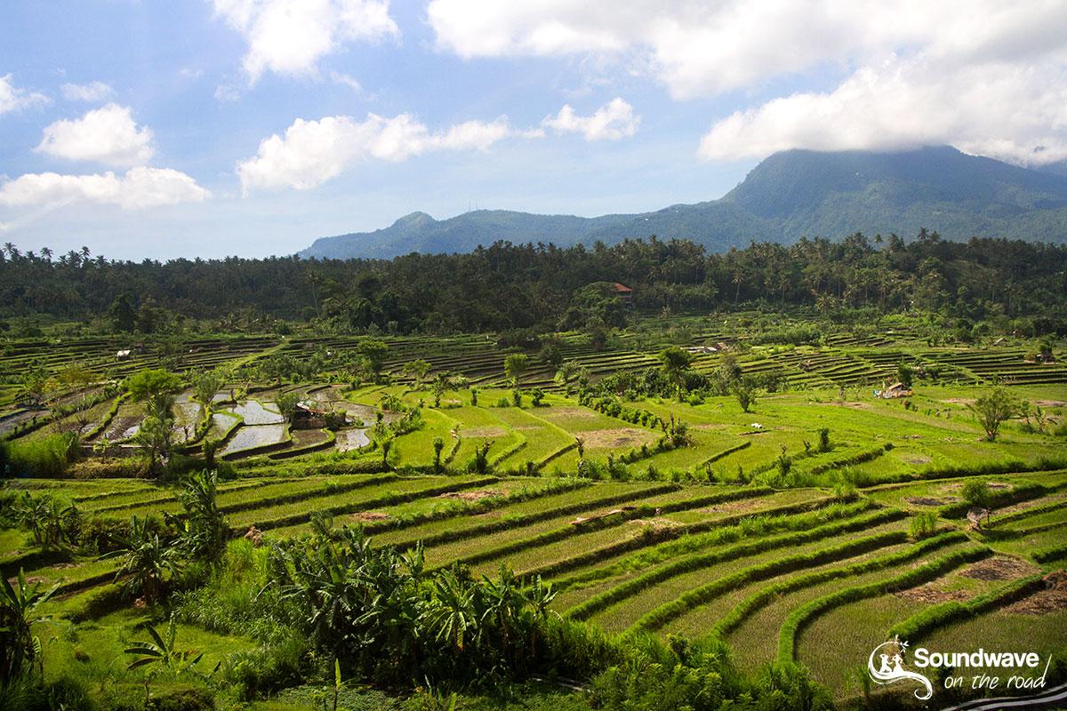 Amazing rice fields in Bali