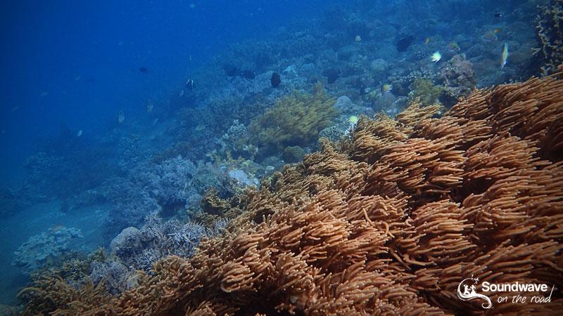 Snorkel in Amed, Bali