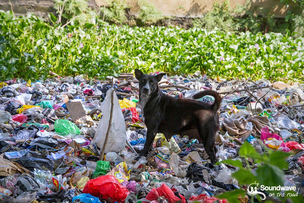 Chien errant dans les ordures à Bali