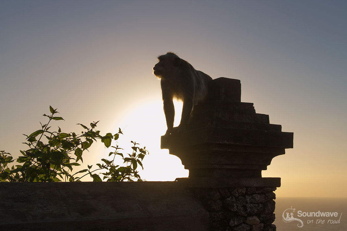 Monkey in Uluwatu