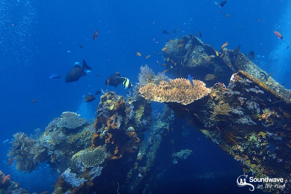 Dive the USS Liberty Shipwreck, in Tulamben, Bali
