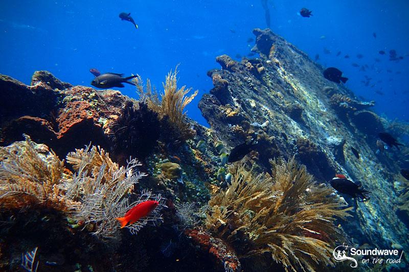 Snorkeling the USS Liberty Shipwreck, in Tulamben, Bali