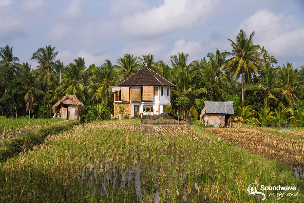 Ubud landscape