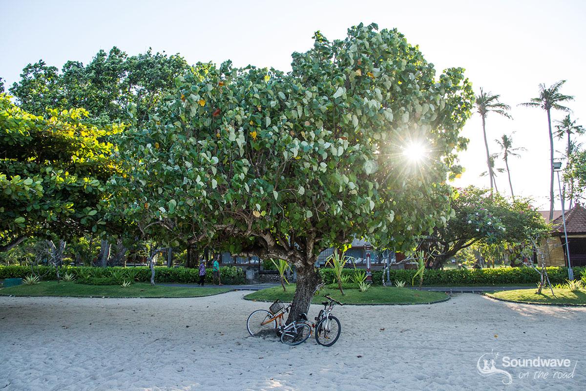 Bikes under a tree on a beach
