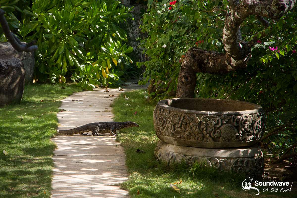 Monitor lizard in Nusa Lembongan