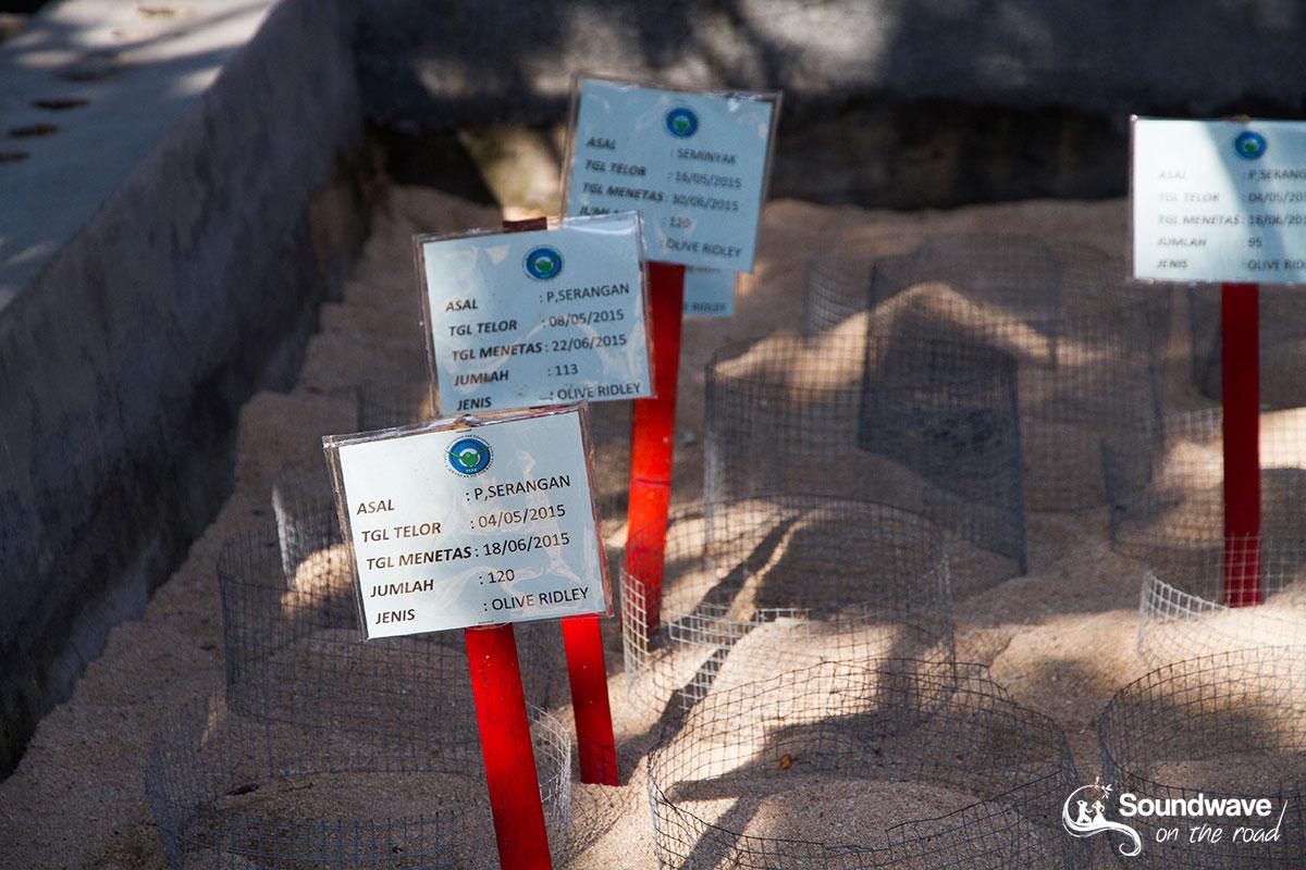 Centre de conservation des tortues à Bali