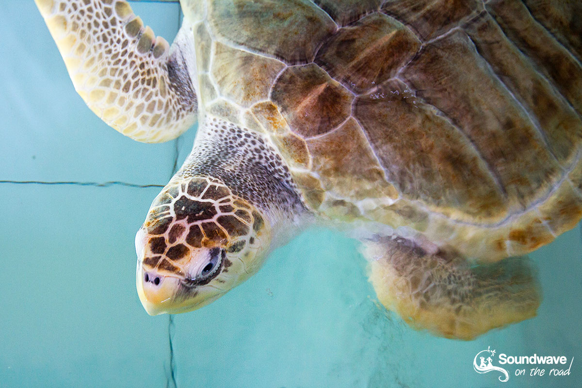 Bénévolat avec les tortues à Bali