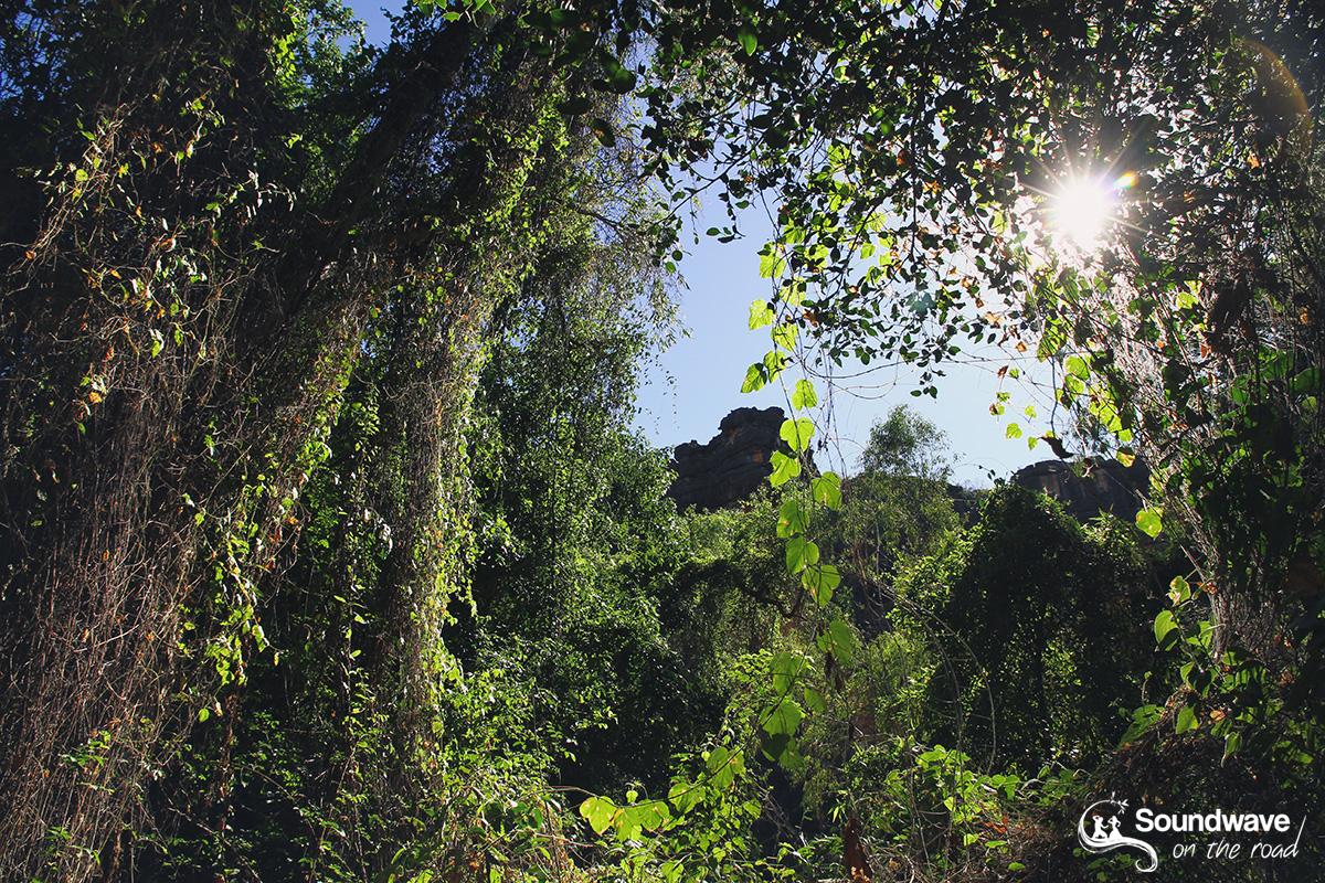 Windjana Gorge Jungle Walk