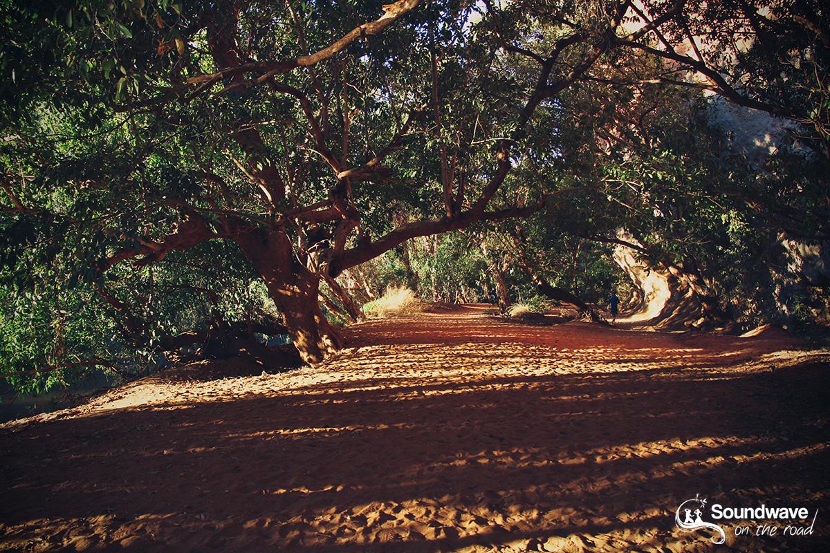 Golden hour in the Windjana Gorge jungle