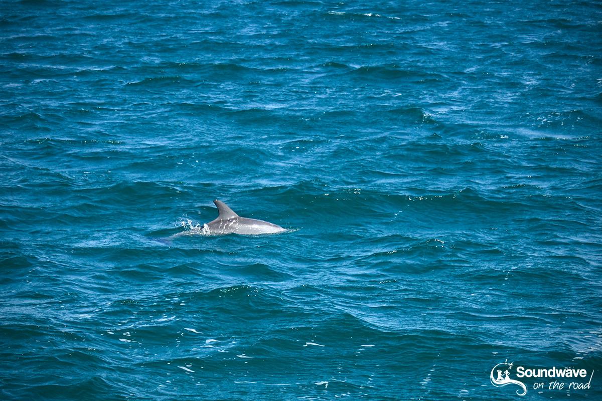 Dolphin in Monkey Mia, Shark Bay, Western Australia