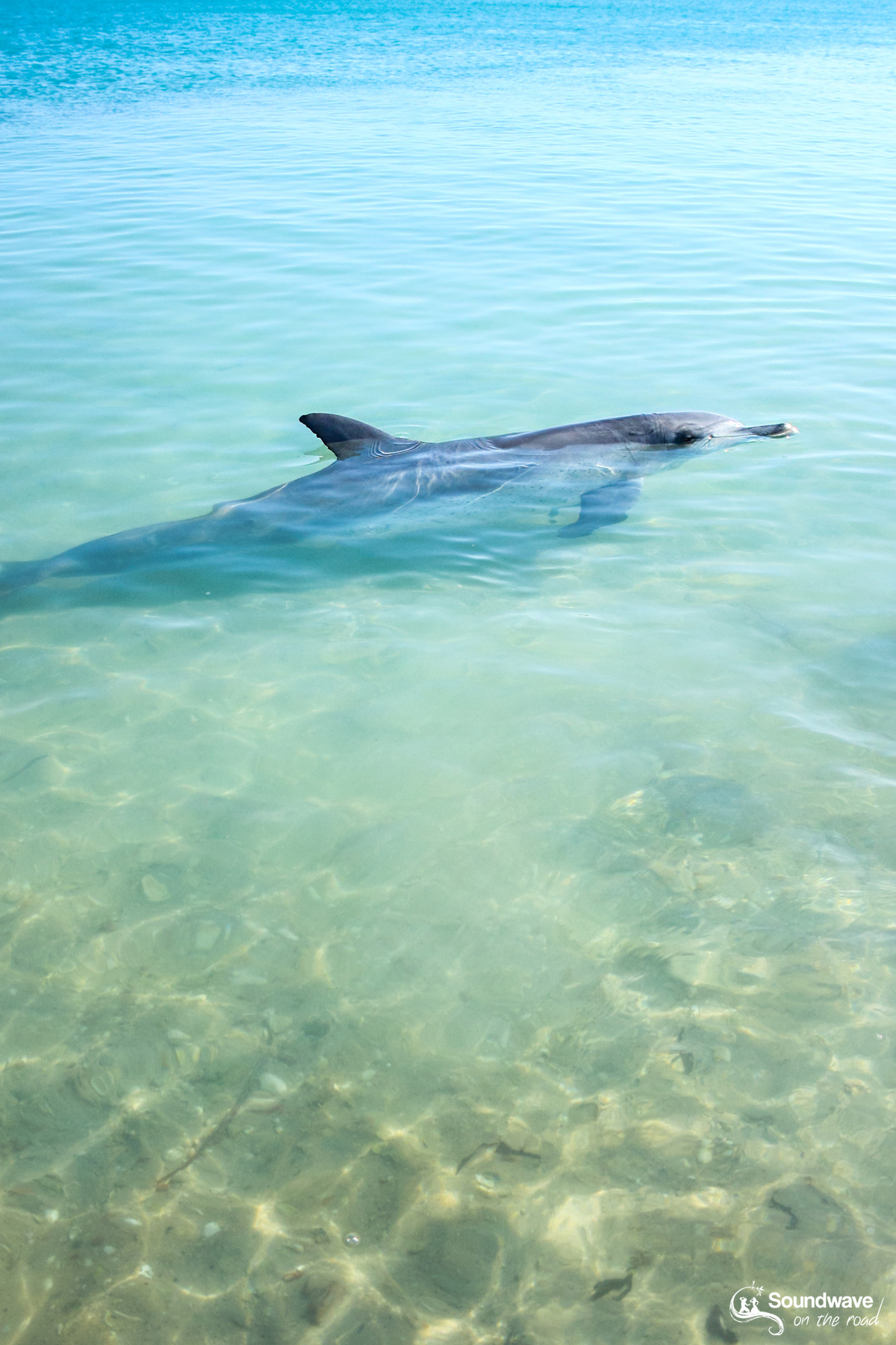 Volunteer with dolphins in Monkey Mia, Shark Bay, Western Australia