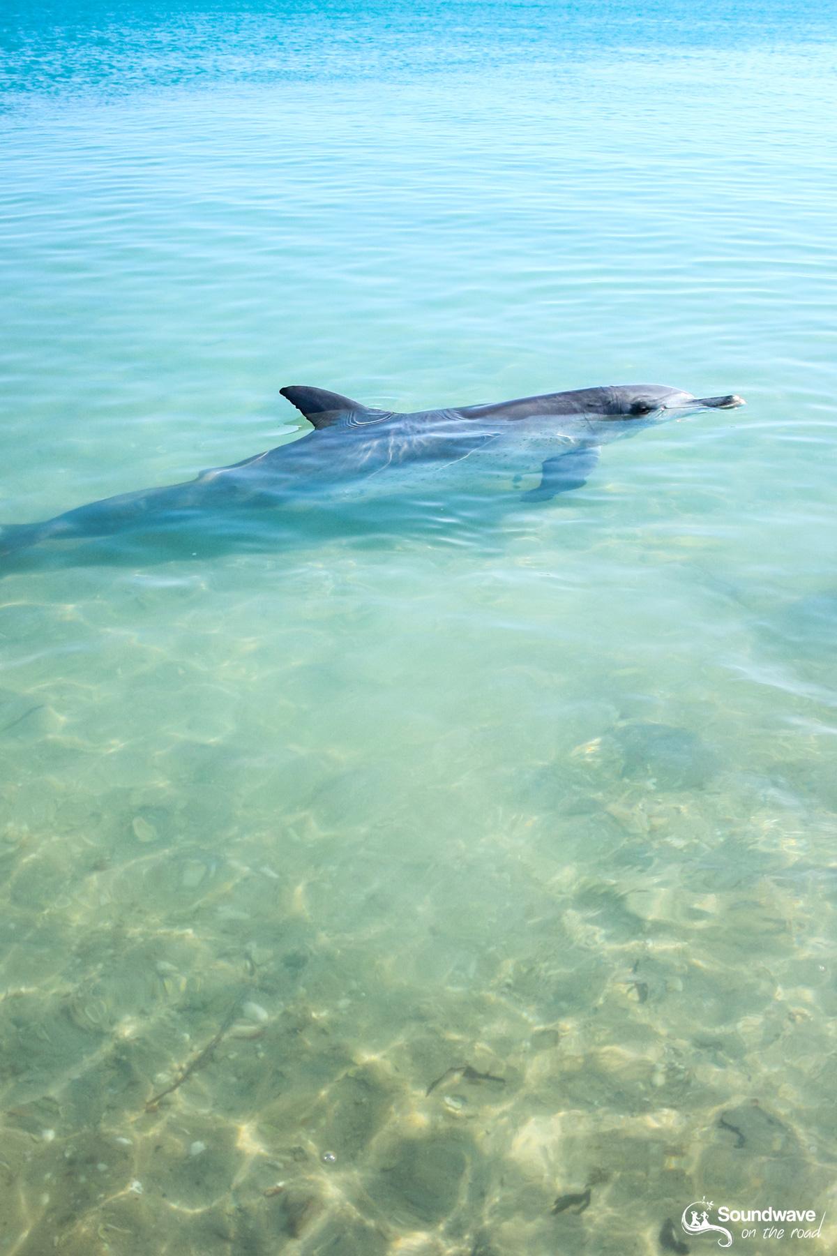 Volunteer with dolphins in Monkey Mia, Shark Bay, Western Australia