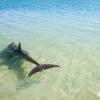 Volontariat avec les dauphins de Monkey Mia
