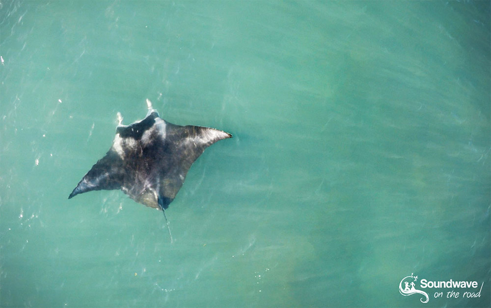 Manta Ray at Gnaraloo