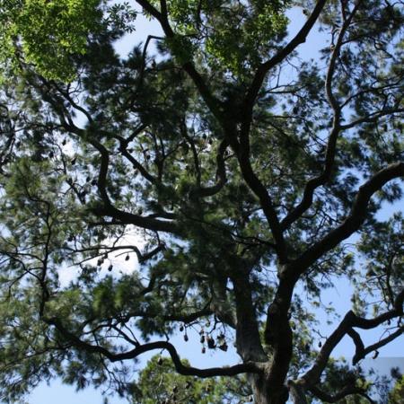 Un Des Perchoirs à Chauves-souris Du Jardin Botanique De Sydney