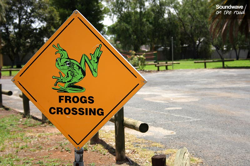 Frogs crossing
