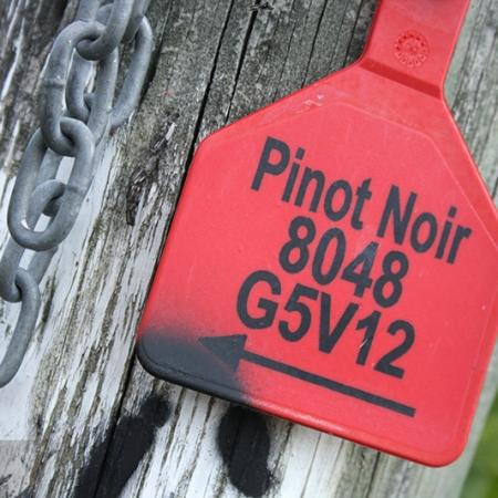 Etiquette De Cépage Pinot Noir
