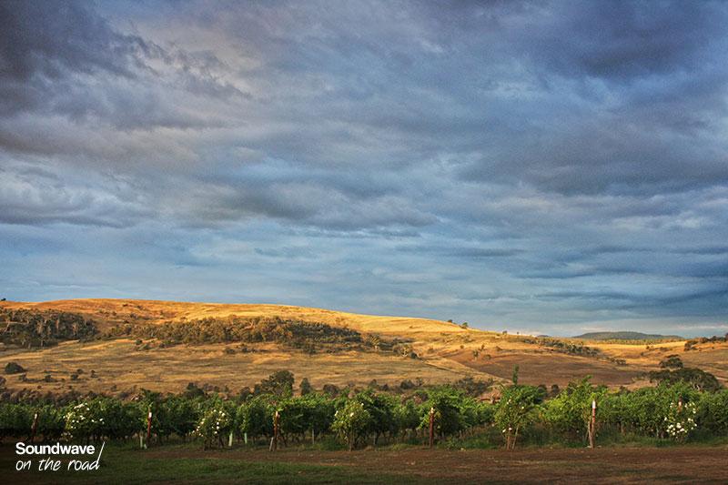 Les vignes de Meadowbank wines en Tasmanie