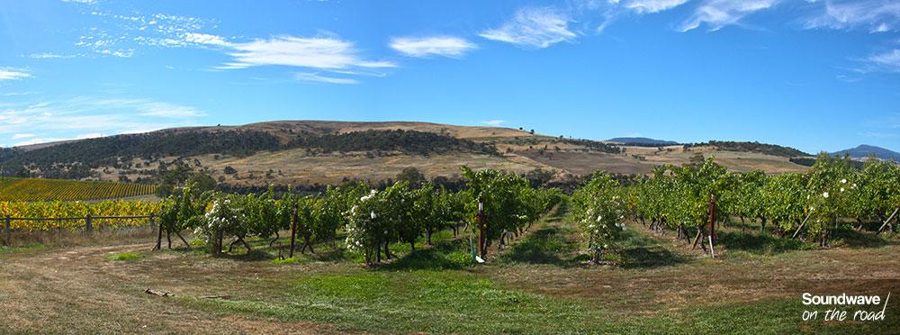 Vignoble en Tasmanie