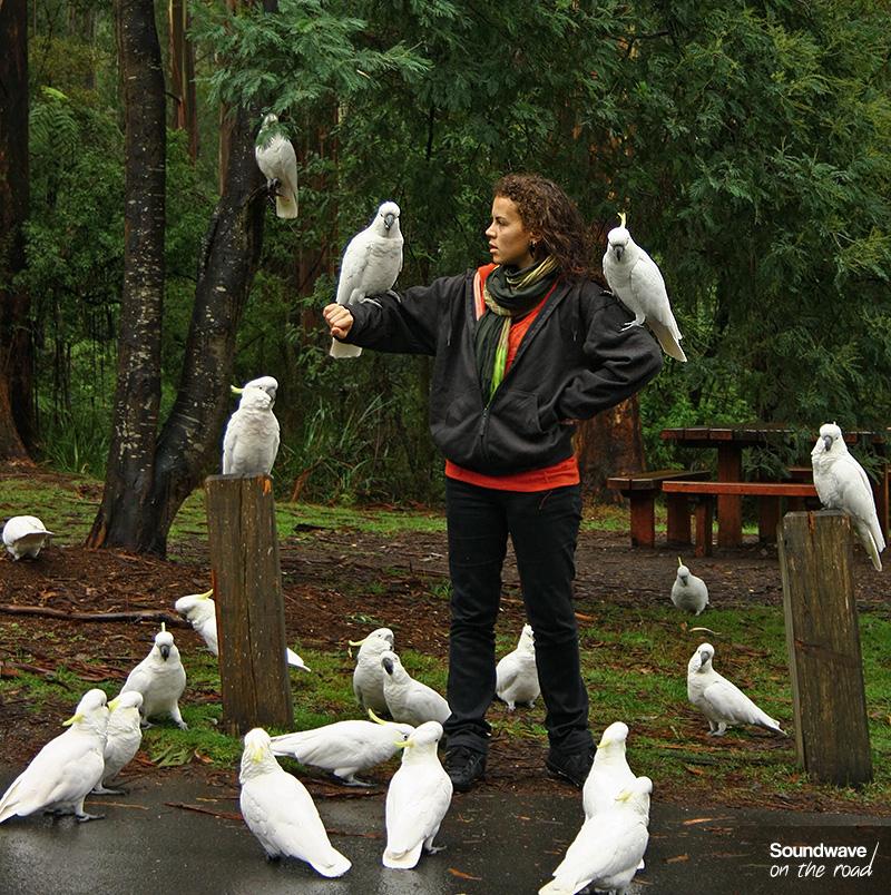 Jeune femme entourée de cacatoès en Australie