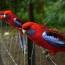 Les Oiseaux Du Dandenong Ranges National Park