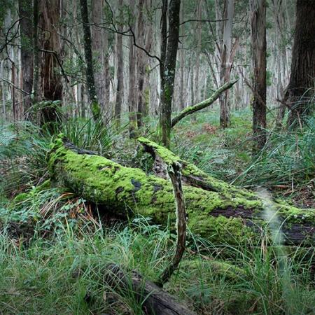 Tronc D'arbre Couvert De Mousse Couché Dans Une Forêt