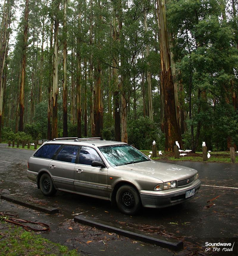 Voiture en forêt