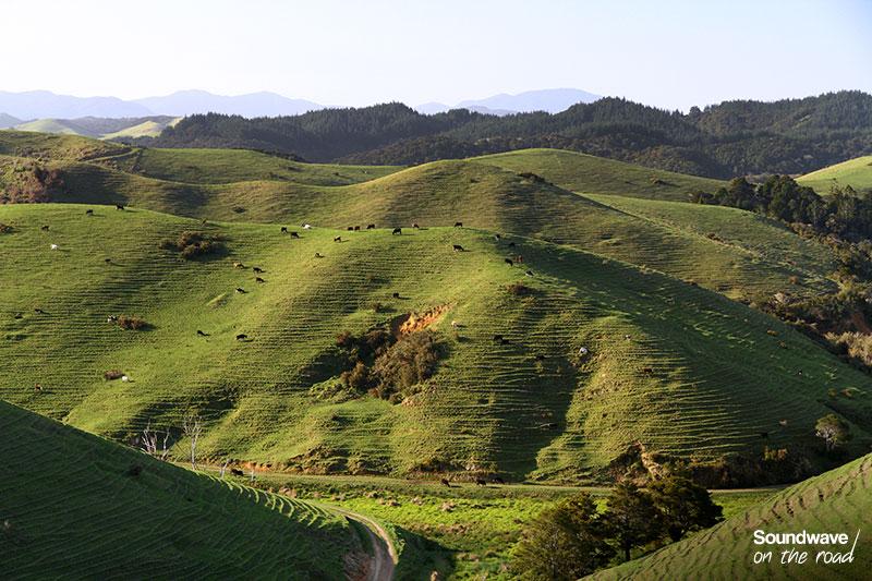 Paturages et paysage verdoyant