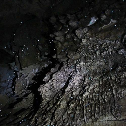 Grotte, Stalactites Et Vers Luisants