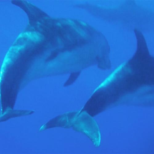 Nage Avec Des Dauphins En Nouvelle Zélande