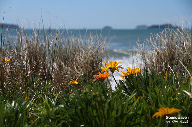 Fleurs jaunes sur fond d'océan