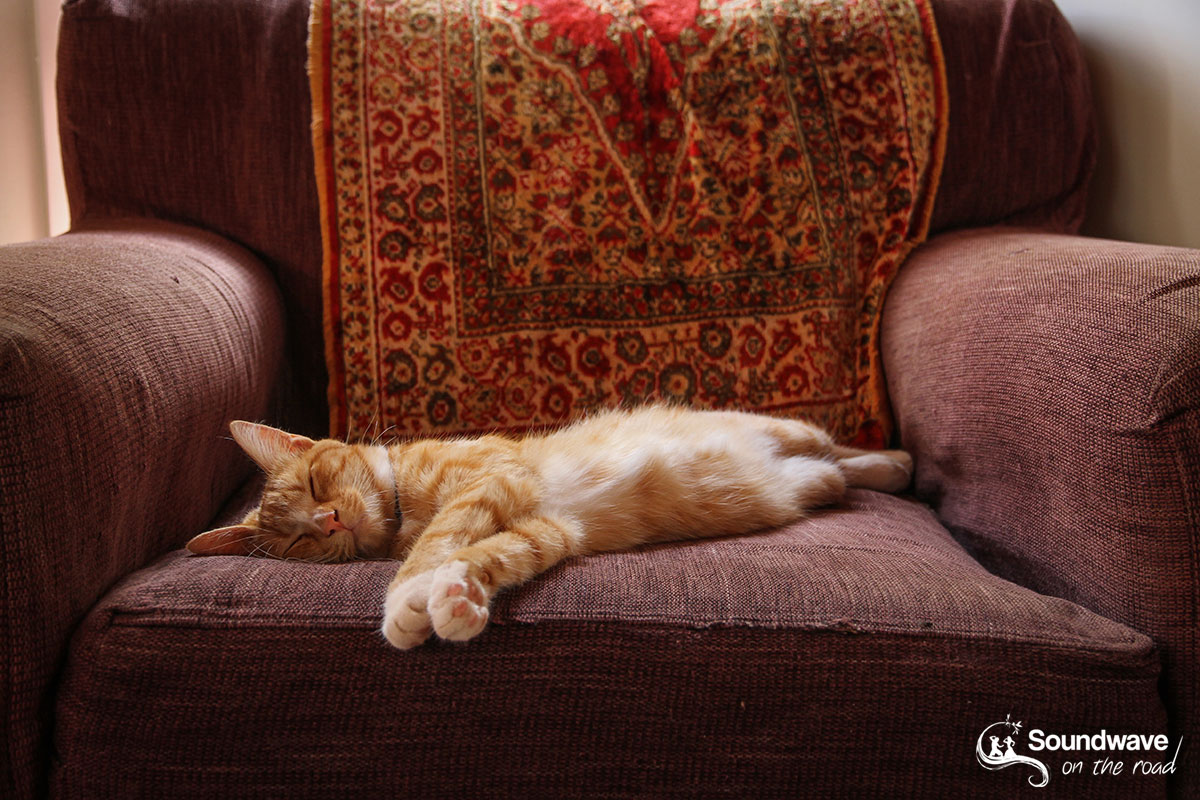 Ginger cat on a red couch