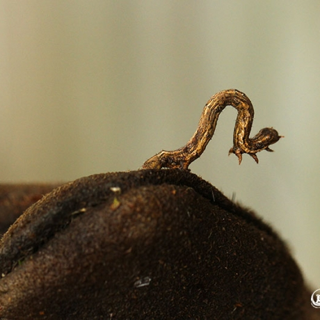 Strange Caterpillar