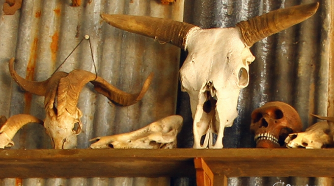 Skulls In A Vintage Museum