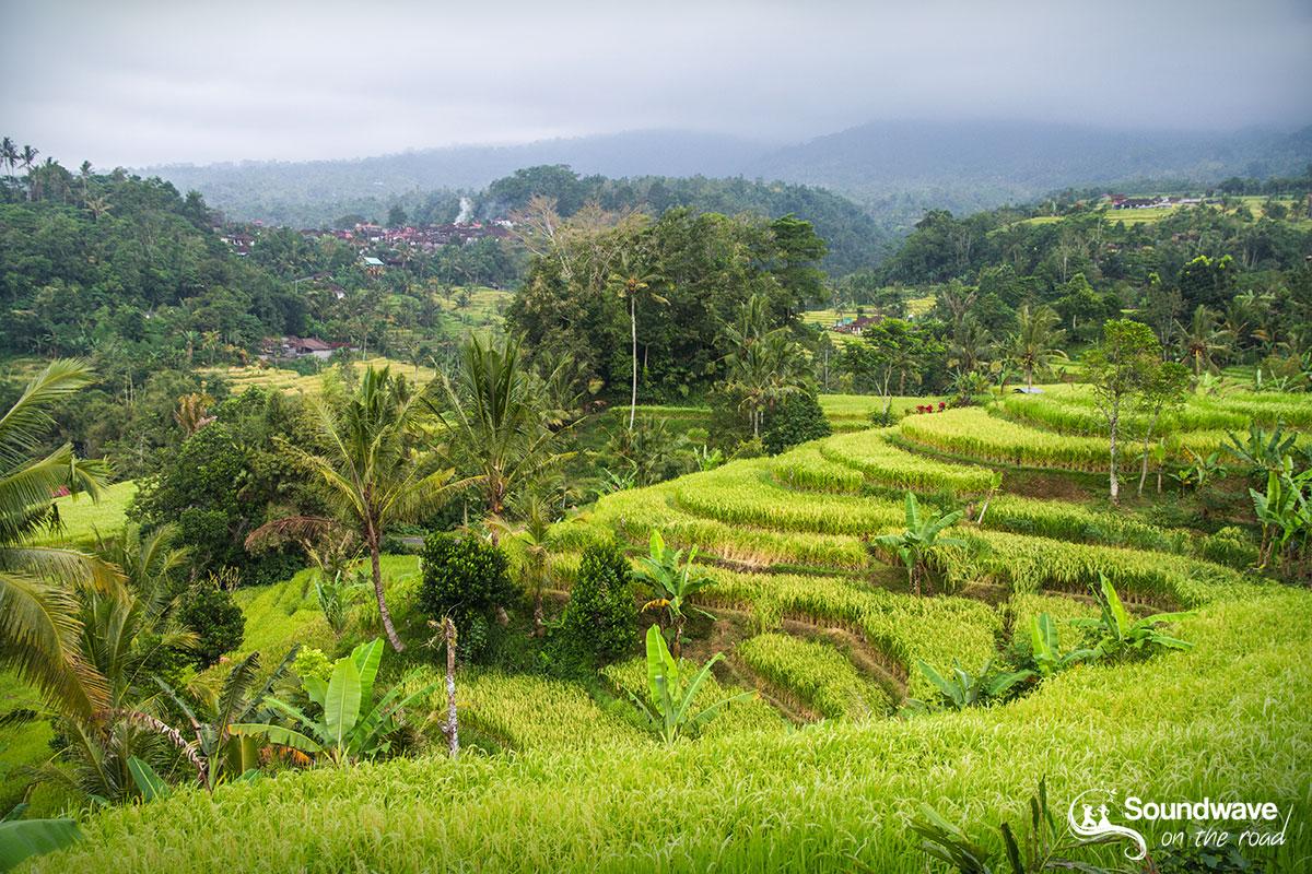 Jatiluwih rice terraces in Bali